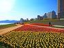 형산강 수변공원 튤립