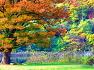화천사랑나무 그리고 반지교