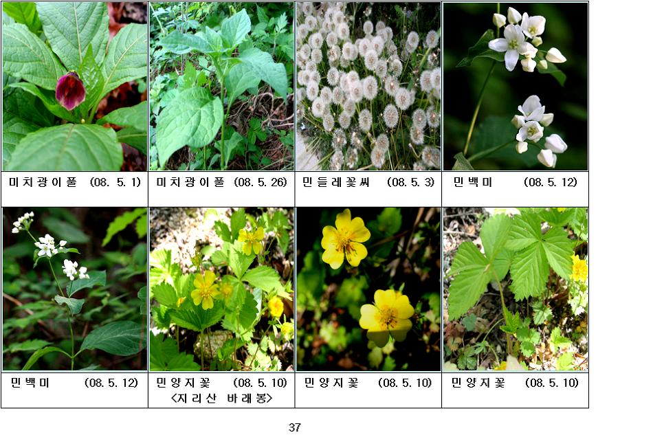 봄에 피는 야생화(5월-10)