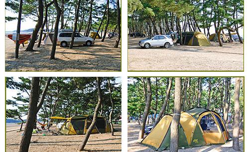 [캠핑오푸]충남-태안군-몽산포오토캠핑장