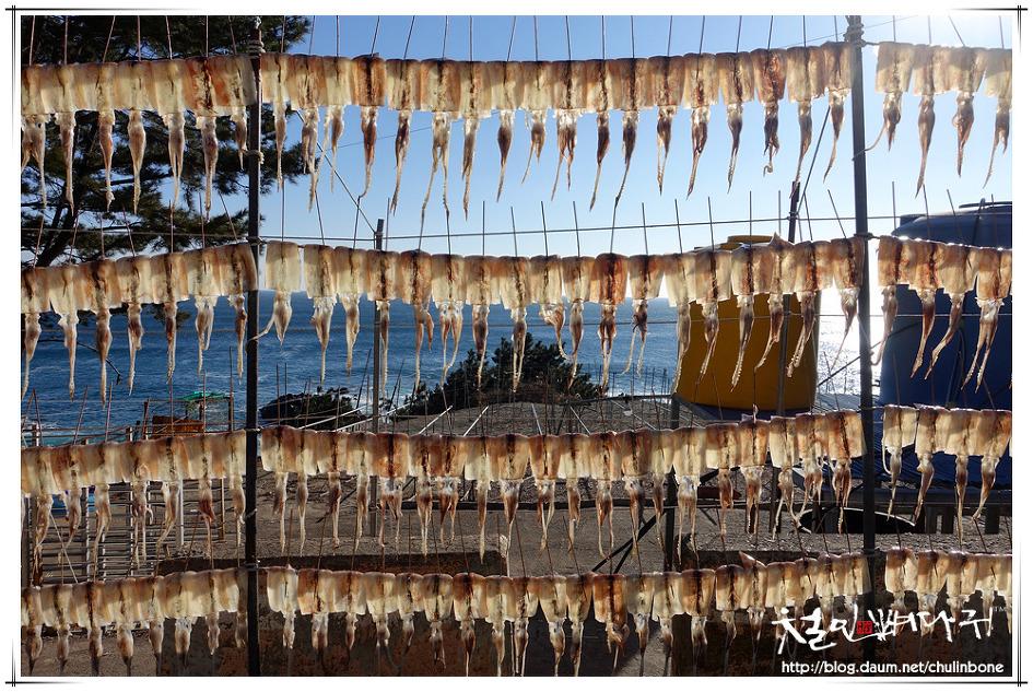 일광욕하는 오징어s