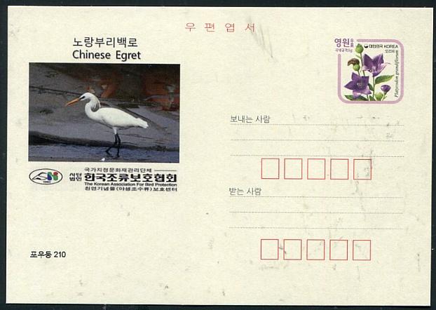 조류엽서 97. 노랑부리백로( Chinese Egret) 중백로( Intermediate Egret)