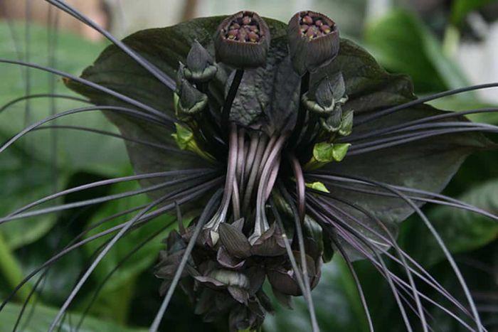오싹하게 하는 식물들 (사진)