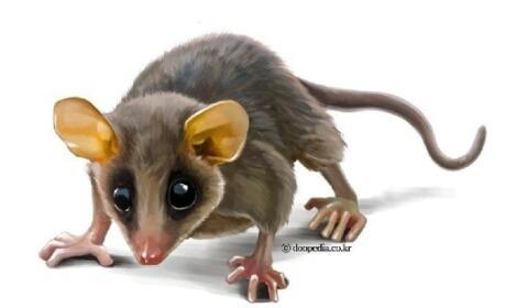 12 지지 동물 중에 쥐(子), 박쥐 등에 관한 꿈